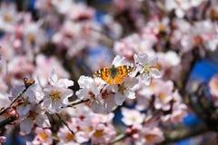 Schmetterling Ibiza stockbild