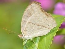 Schmetterling im Garten Lizenzfreie Stockfotografie