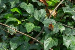 Schmetterling im grünen Laub lizenzfreies stockbild