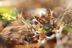 Schmetterling im Herbstrosa #2 Stockfotos