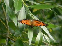 Schmetterling im Holz Stockbild