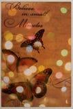 Schmetterling im Licht Stockfotografie