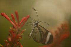 Schmetterling im Nebel Lizenzfreie Stockfotos