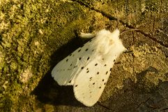 Schmetterling im Schatten auf einem Stumpf aß im Frühjahr Morgen Lizenzfreies Stockfoto