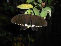 Schmetterling im Unschärfehintergrund, auf grünem Blatt stockbilder