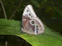 Schmetterling im Vordergrund Stockbilder