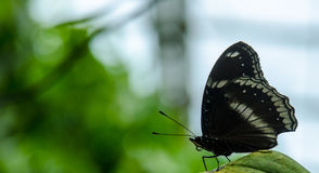 Schmetterling im Zug graden Park stockbild