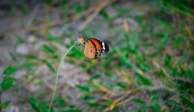 Schmetterling mit Blumenbaum Stockfotografie