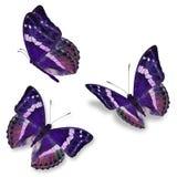 Schmetterling mit drei Purpur Lizenzfreie Stockfotografie