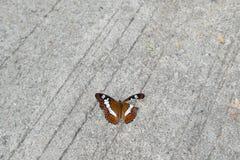 Schmetterling mit schädigendem Flügel Stockbild