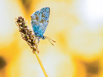Schmetterling morgens Sun Stockfotos