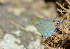 Schmetterling nahe oben 2 Stockbilder