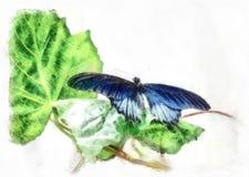Schmetterling Papilio-polytes Lizenzfreies Stockbild