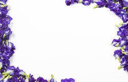 Schmetterling Pea Flower Stockbilder