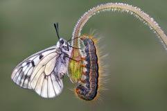 Schmetterling ` s Gemeinschaft Lizenzfreie Stockbilder