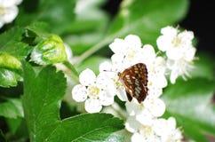 Schmetterling ` s Rest stockfoto