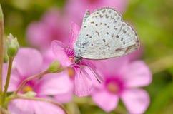 Schmetterling saugt eine Blume lizenzfreie stockbilder