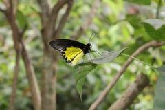 Schmetterling schön lizenzfreies stockfoto