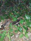 Schmetterling Schwarzweiss lizenzfreies stockfoto