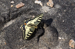 Schmetterling seatting auf Sand Stockfotos