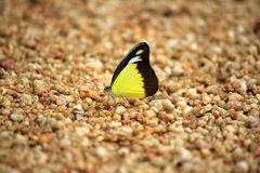 Schmetterling am Strand Stockfoto