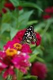 Schmetterling u. rosa Blume Lizenzfreies Stockfoto