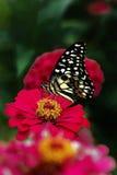 Schmetterling u. rosa Blume Lizenzfreies Stockbild