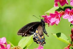 Schmetterling und Ameise Swallowtail auf grünem Hintergrund Lizenzfreie Stockfotos