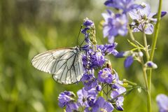 Schmetterling und Blume lizenzfreies stockfoto