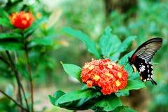 Schmetterling und Blume lizenzfreie stockbilder