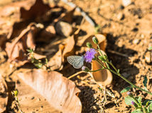 Schmetterling und Blume Lizenzfreies Stockbild