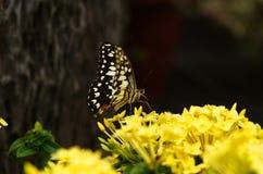 Schmetterling und Blume Stockfotos