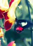 Schmetterling und Blume Lizenzfreie Stockfotografie