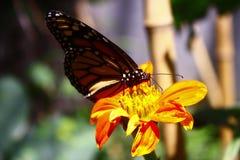 Schmetterling und Blume lizenzfreie stockfotos