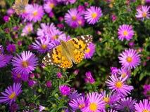 Schmetterling und Blumen Stockfotos