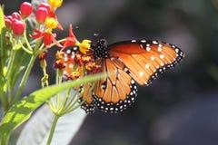 Schmetterling und Blumen Stockfotografie