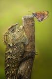 Schmetterling und Drache stockbilder