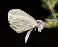 Schmetterling und eine Blume. Lizenzfreies Stockbild