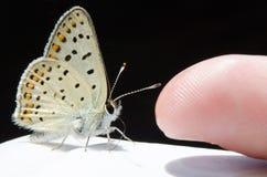 Schmetterling und Kind` s Finger Lizenzfreies Stockbild