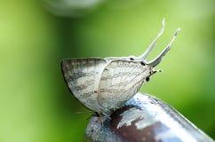 Schmetterling und Licht Lizenzfreie Stockfotos