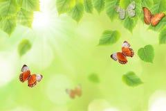 Schmetterling und neuer grüner Blatthintergrund Lizenzfreies Stockfoto
