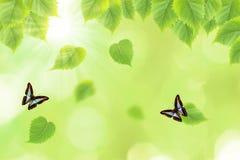 Schmetterling und neuer grüner Blatthintergrund Stockfotos
