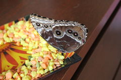 Schmetterling verwandeln Selbst gemachter Schmetterling stockfotografie