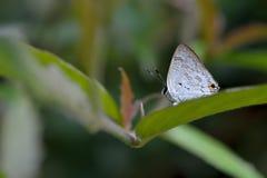 Schmetterling vom Taiwan Stockfotos