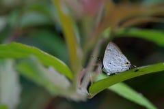 Schmetterling vom Taiwan Lizenzfreie Stockfotos