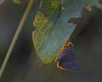 Schmetterling wenig. Lizenzfreie Stockbilder