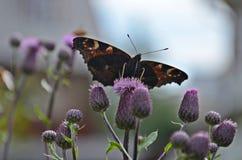 Schmetterling zwischen Disteln Lizenzfreies Stockfoto
