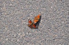 Schmetterlinge Lizenzfreie Stockbilder