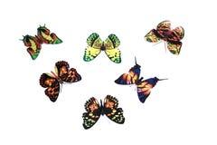 Schmetterlinge Lizenzfreie Stockfotos