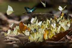 Schmetterlinge lizenzfreies stockfoto